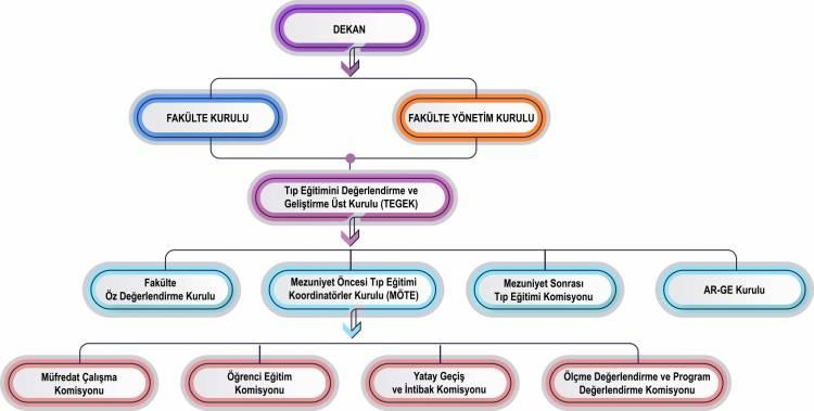 Tıp Fakültesi Eğitimi Organizasyon Şeması